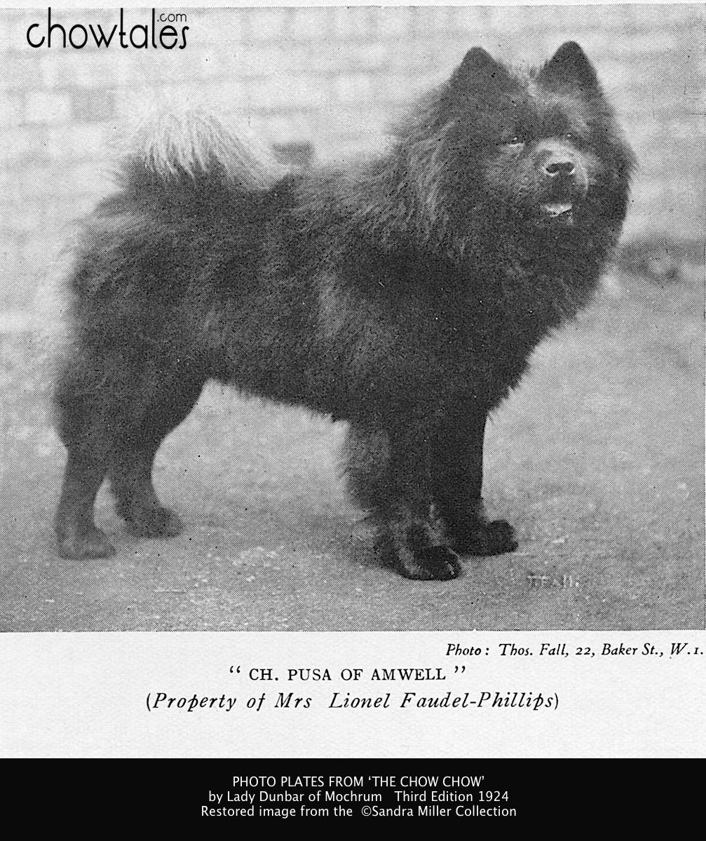 1865 1930 History Timeline Earliest Chows And Breeders Of England