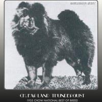 CH. FARLAND THUNDERGUST IN KIP KOPATCHES BOOK