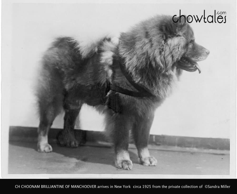 brilliantine arrives in America 1925