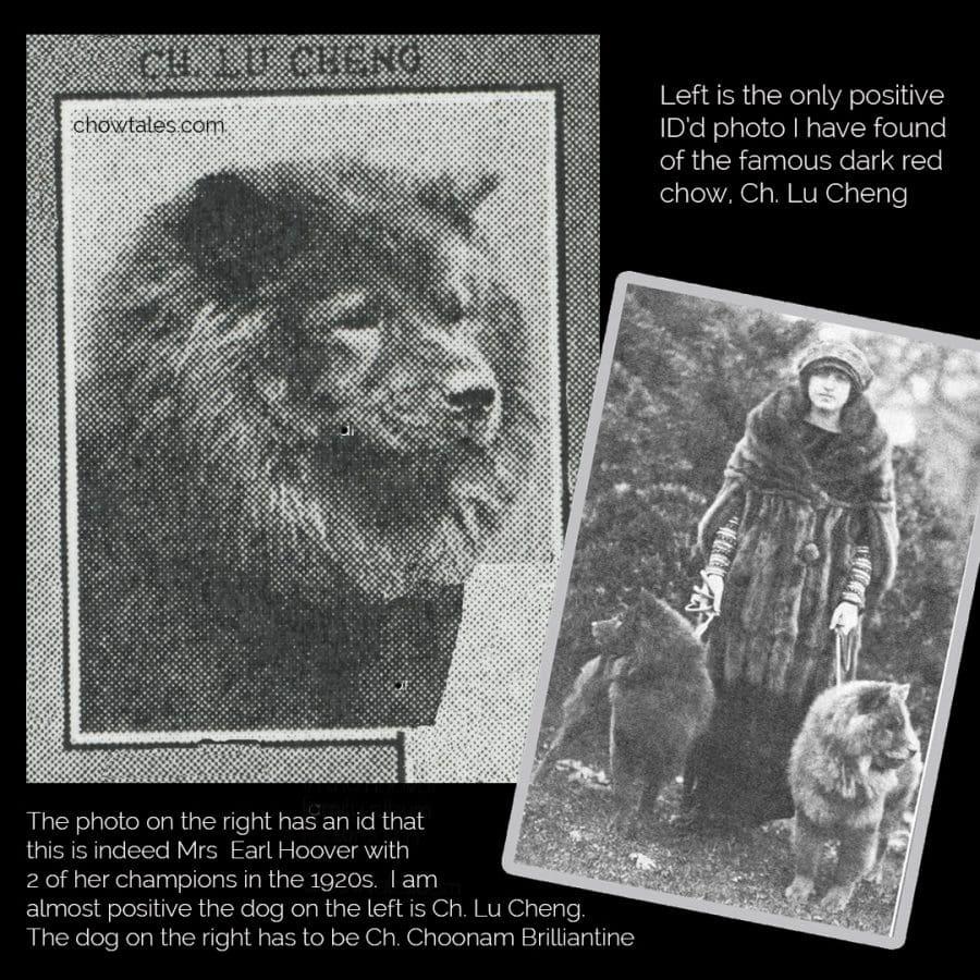lu cheng collage