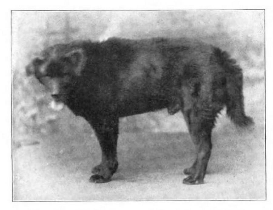 Chinese Gordon Wang 1865 photo